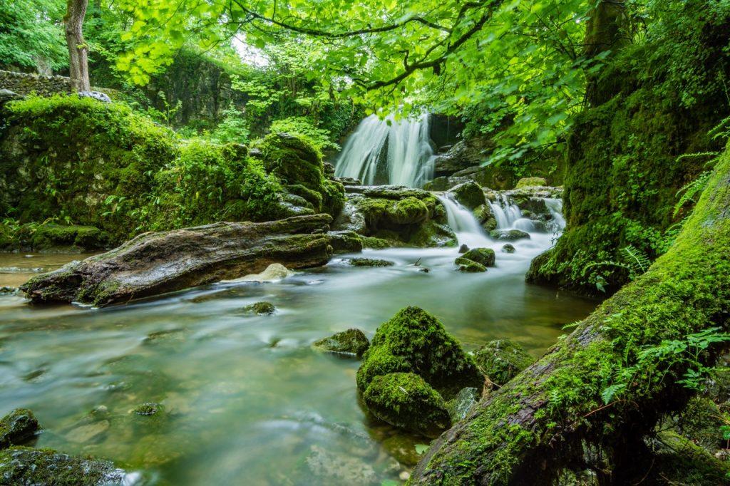 rainforest waterfall nature